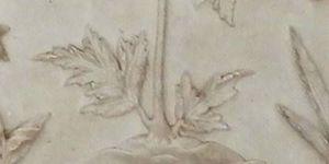 Absinthe, mugwort