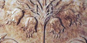 Imperial Fritillary